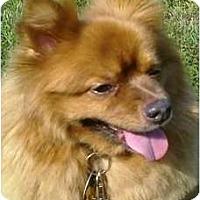 Adopt A Pet :: Mr. Nibbles - Gum Spring, VA