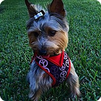 Adopt A Pet :: Georgie - West Palm Beach, FL