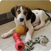 Adopt A Pet :: Billy - Fulton, MD