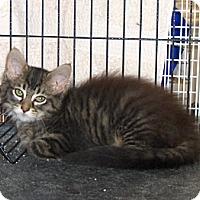 Adopt A Pet :: Milo - Richmond, VA