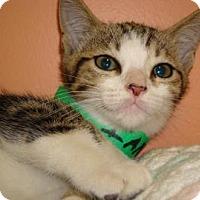 Adopt A Pet :: Imani - Miami, FL