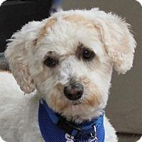 Adopt A Pet :: Rhett - La Costa, CA