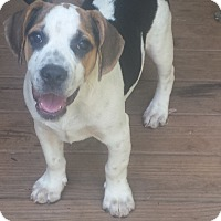Adopt A Pet :: Andy Mack - E Windsor, CT