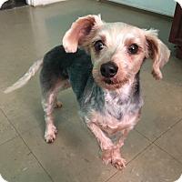 Adopt A Pet :: Molly - Russellville, KY