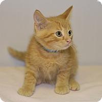 Adopt A Pet :: Cameron - Medina, OH