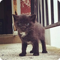 Adopt A Pet :: Elevensies (SD) - Trenton, NJ