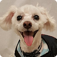 Adopt A Pet :: Ranger - Salem, OR