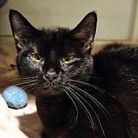 Adopt A Pet :: Yumi - Lincoln, NE