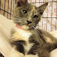 Adopt A Pet :: Lucinda - Lunenburg, MA