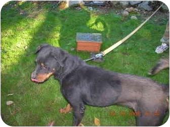 Rottweiler Mix Dog for adoption in latrobe, Pennsylvania - TOBY JAMES