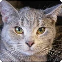 Adopt A Pet :: Chelsea - San Ramon, CA