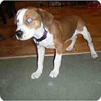 Adopt A Pet :: Theia - Madison, WI