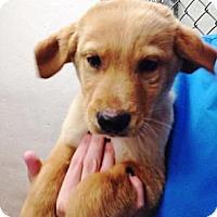 Adopt A Pet :: Grumpy - Silsbee, TX