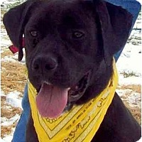 Adopt A Pet :: ARTHUR - Wakefield, RI
