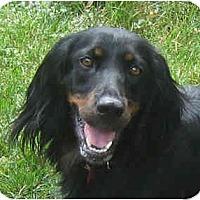 Adopt A Pet :: Molly - DeKalb, IL