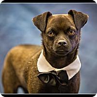 Adopt A Pet :: Blacki - Wickenburg, AZ