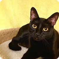 Adopt A Pet :: Sabrina - Foothill Ranch, CA