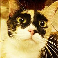 Adopt A Pet :: Patches - Santa Clarita, CA