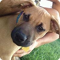 Adopt A Pet :: Titan - Sinking Spring, PA