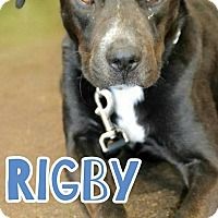 Adopt A Pet :: Rigby - Scottsdale, AZ