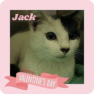 Domestic Shorthair Kitten for adoption in Hawthorne, California - Jack