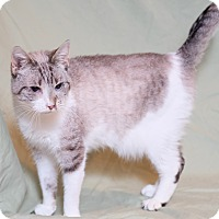 Adopt A Pet :: Lilac - Lexington, KY