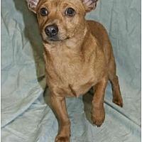 Adopt A Pet :: Maxillion - Colton, CA