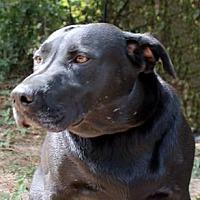 Adopt A Pet :: Sugar - The Woodlands, TX