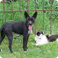 Adopt A Pet :: PRISCILLA - Bedminster, NJ