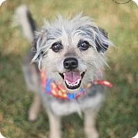 Adopt A Pet :: Carlitos - Kingwood, TX
