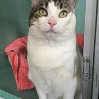 Adopt A Pet :: Princess - Philadelphia, PA