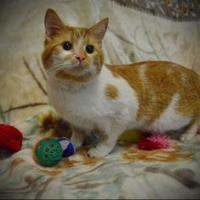 Adopt A Pet :: Meowzers - North Battleford, SK