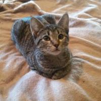 Adopt A Pet :: Twinkle - Bethany, OK
