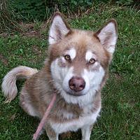 Adopt A Pet :: Luke - Augusta County, VA