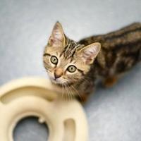 Adopt A Pet :: Gumdrop - Newton, KS