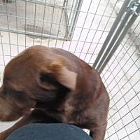 Adopt A Pet :: Sunny - Clarksville, AR