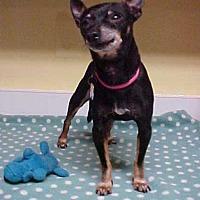 Adopt A Pet :: Miller - 6 lbs. - Dahlgren, VA