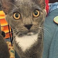 Adopt A Pet :: Mongoose - Los Angeles, CA