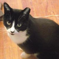 Adopt A Pet :: Spotty - Toronto, ON