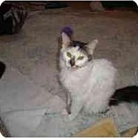 Adopt A Pet :: Suzie - Strathmore, AB
