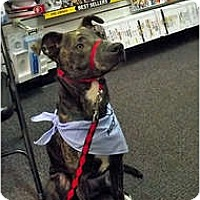 Adopt A Pet :: Chewy - Indianapolis, IN