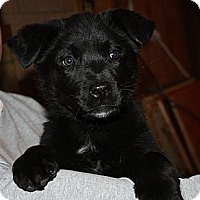 Adopt A Pet :: Sissy - PENDING, in Maine - kennebunkport, ME