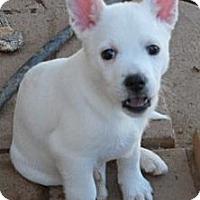 Adopt A Pet :: Trixie - dewey, AZ