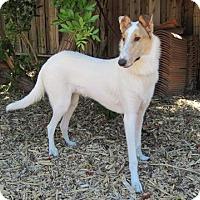 Adopt A Pet :: Salt - Riverside, CA