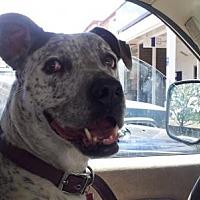 Adopt A Pet :: FRECKLES - Pena Blanca, NM