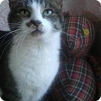 Adopt A Pet :: Annie - Witter, AR