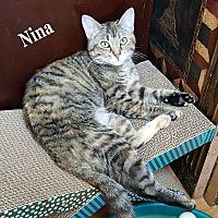 Adopt A Pet :: Nina - Bentonville, AR