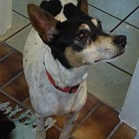 Adopt A Pet :: Miikkii in Aransas Pass - Austin, TX