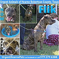 Adopt A Pet :: Fred aka Flik - Hearne, TX