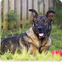 Adopt A Pet :: Casey - greenville, SC
